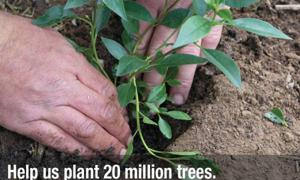 20 million trees launched with first grants round now open